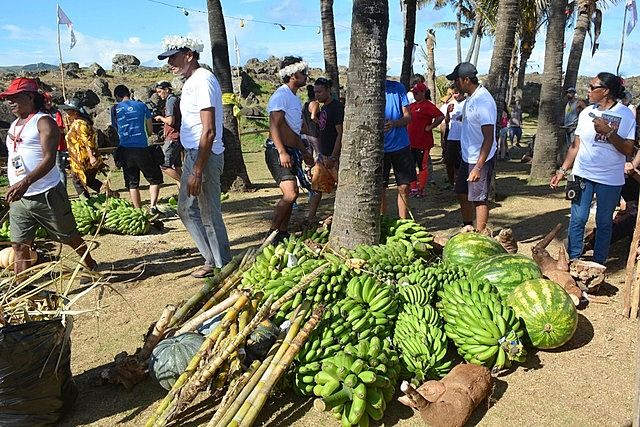 Collected fruit is accumulated to be weighted later Tapati Festival Easter Island