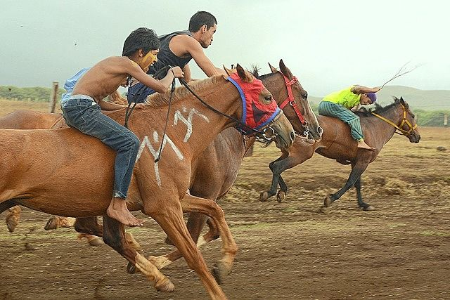 Young riders during horse races at Vaihu Tapati Festival Easter Island